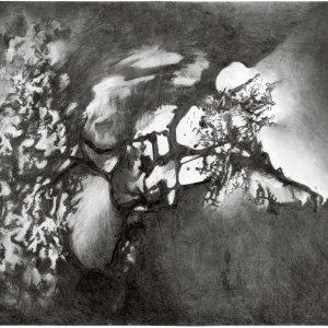 zonder titel, 2018, houtskool iep op papier, 100 x 70