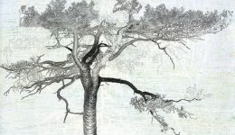 10.-Pinus-Sylvestris-Krossfuru-tempera-pastel-en-potlood-295-x-42-cm-2019-1.jpg