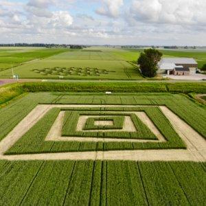 Landschapsproject 'Ode aan Escher op 't Bildt 2018