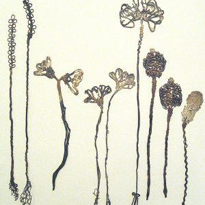 MaxFloor_Herbarium, 2008-2012