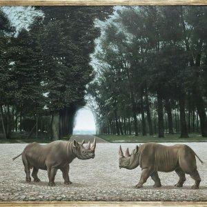 De Rhinocerossen 1956, 72 x 81cm part.coll.